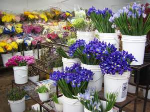 Halls Atlanta Wholesale Florist is a supplier to the trade – we are not a retail florist. As such, we require specific legal documents as listed below* to ...